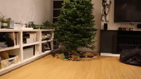 Анимация Две собаки очень обрадовались, когда в доме наконец -то появилась новогодняя елка