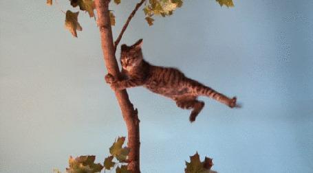 Анимация Кот держась передними лапами за ствол дерева, пытается удержаться от порывов сильного ветра