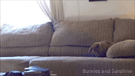 Анимация Два кролика играют на диване (Bunnies and Sunshine) (© Anatol), добавлено: 13.01.2016 21:46