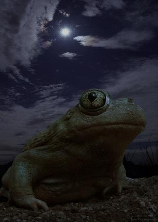 Анимация Лягушка на фоне ночного неба с полной луной