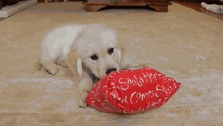 Анимация Маленький щенок пытается открыть зубами новогодний подарок
