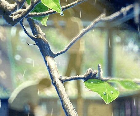 Анимация Капли дождя стекают по ветке дерева (© Krista Zarubin), добавлено: 19.01.2016 11:50