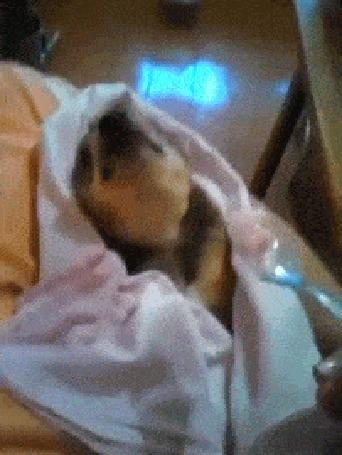 Анимация Собачку кормят с ложечки, как маленького ребенка