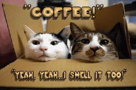 Анимация Два кота в коробке принюхиваются к запаху кофе (Coffee! Yeah, yeah. I smell it too! / Кофе! Ага, я тоже чувствую его аромат!)