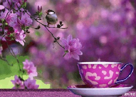 Анимация Чашка с горячим чаем стоит на фоне весенней ветки с птицей