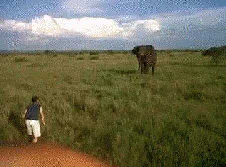 Анимация Мужчина пытается напугать слона