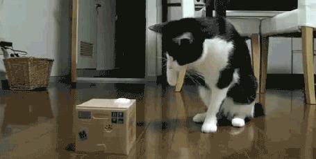 Анимация Кот пытается открыть коробку