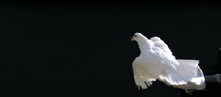 Слава, гифы голубя