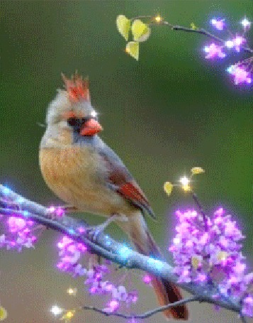 Анимация Райская птичка на веточке (© zlaya), добавлено: 04.02.2016 00:11