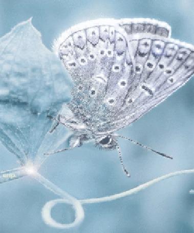 Анимация Красивая серебристая бабочка