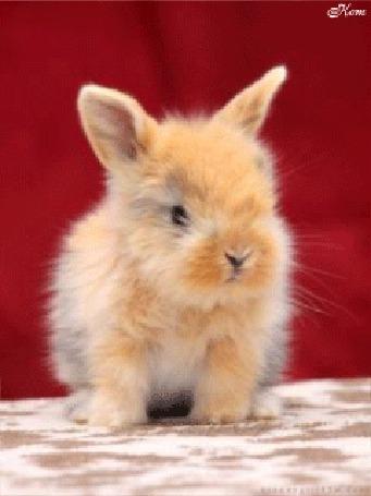 Анимация Маленький пушистый кролик (© Bonderos), добавлено: 05.02.2016 01:11