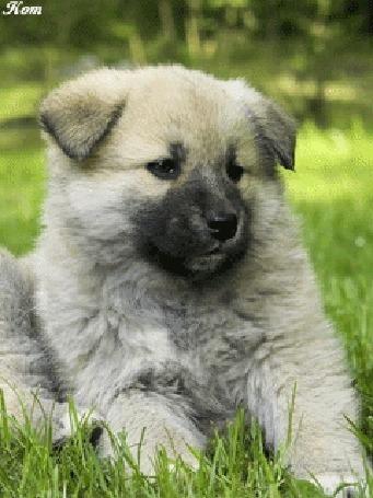 Анимация Красивый щенок лежит на траве, автор Кот