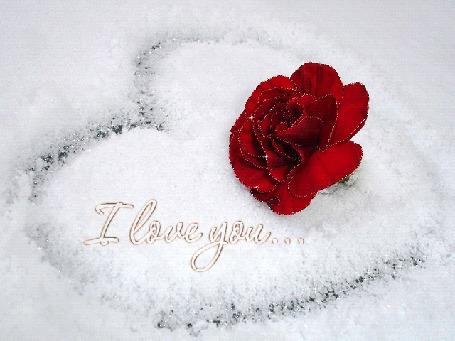 Анимация Роза в сердце на снегу, (I love you / я люблю тебя)