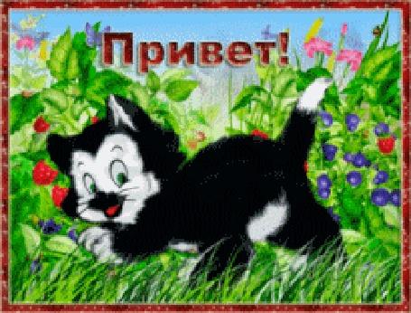 Анимация Черный кот подмигивает в красной мигающей рамке с надписью Привет!