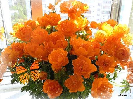 Цветы природа анимированные картинки распускающихся цветов