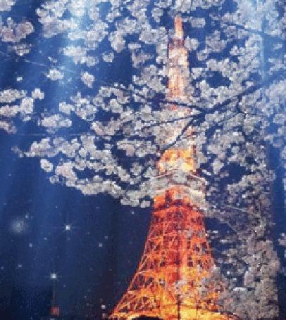 Анимация Эйфелевая башня на фоне цветущего дерева