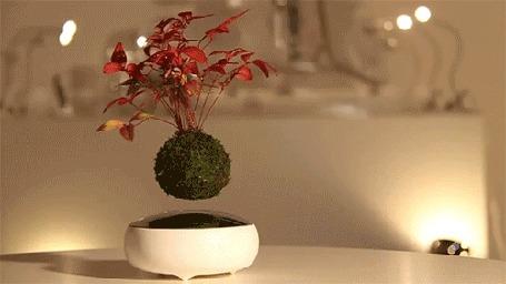 Анимация Небольшое дерево бонсай, парящее в воздухе