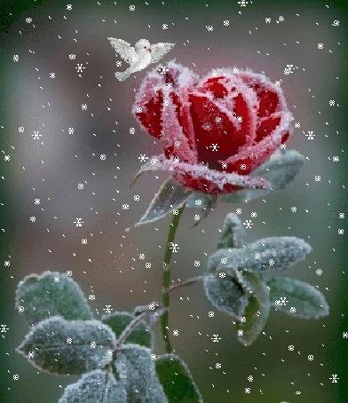 Гифка птичка под снегом