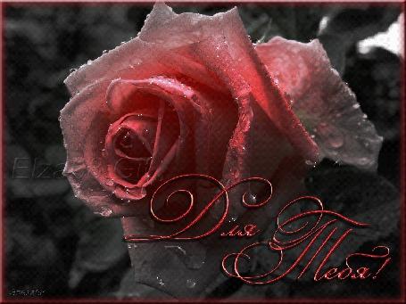 Анимация Розовая роза в каплях воды, (Для тебя), by Эльза68