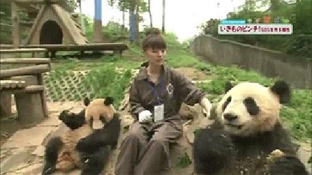 Анимация Девушка кормит панду, в ответ та ласково поглаживает ее по коленке