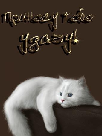 Анимация Белый пушистый кот лежит на диване / Принесу тебе удачу/ (© qalina), добавлено: 15.02.2016 21:17