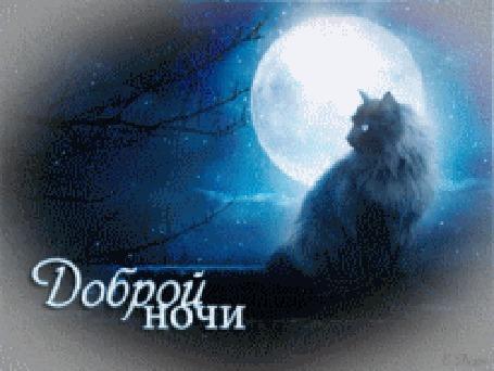 Анимация Кошка сидит у окна на фоне ночного неба с облаками и луной и моргает глазами (Доброй ночи) (© Lady Rock), добавлено: 15.02.2016 23:34
