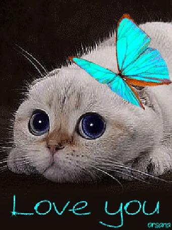 Анимация Голубоглазый котенок с бабочкой, (Love you / я люблю тебя), автор Orsana