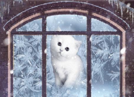 Анимация Котик за окном смотрит на снег
