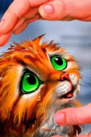 Анимация Мокрый рыжий котенок плачет