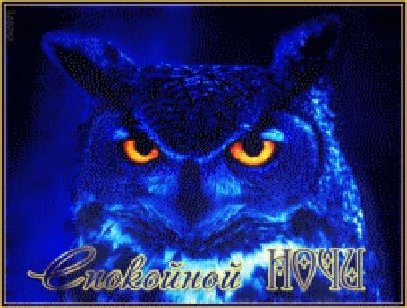Анимация Синяя сова моргает глазами на синем мерцающем фоне в коричневой рамке (Спокойной НОЧИ!)