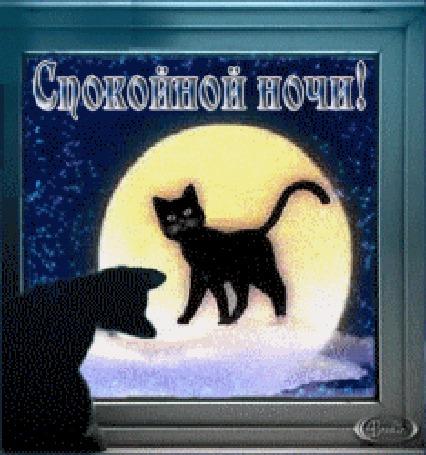 Анимация Черный кот смотрит в окно на луну в которой отображается черная кошка на фоне синего неба с мерцающими звездами (Спокойной ночи)