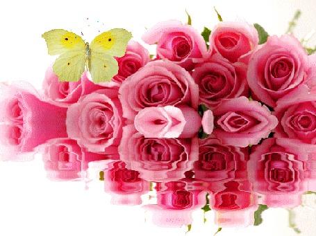 Анимация Над розами, которые отражаются в воде, порхает бабочка