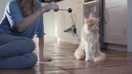 Анимация Хозяйка играется со своим недовольным котом