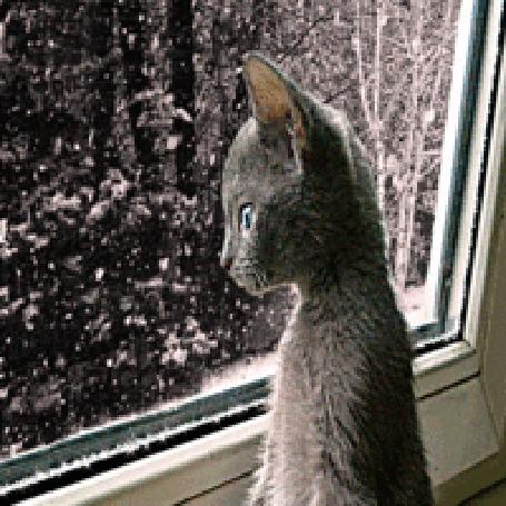 Анимация Котик смотрит на окно, где идет снег (© zlaya), добавлено: 24.02.2016 00:24
