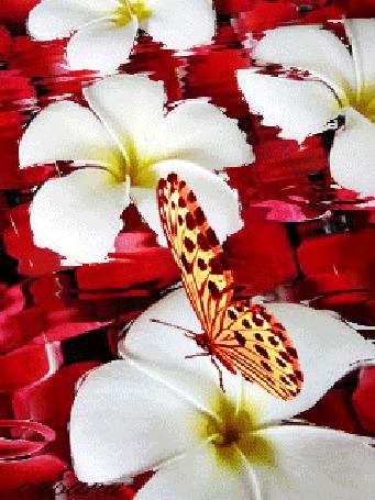 Анимация Бабочка на цветке (© zmeiy), добавлено: 24.02.2016 12:17
