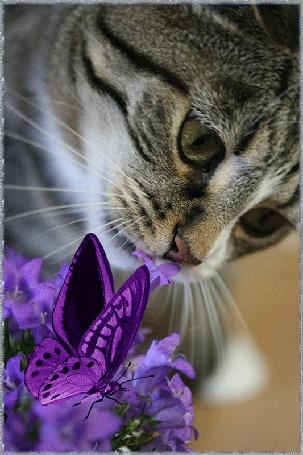 Анимация Кот нюхает колокольчик, а на цветах порхает бабочка, автор pasiqut
