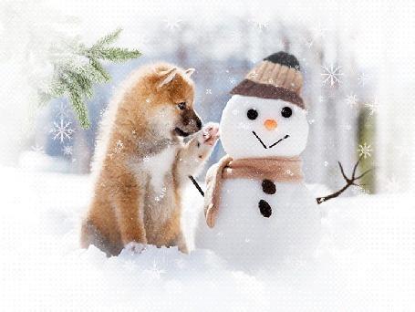 Анимация Милый щенок тянет лапу к снеговику в одежде (© JeremeVoods), добавлено: 27.02.2016 04:08