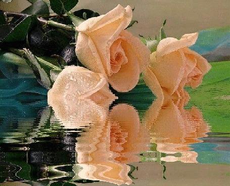 Анимация Персиковые розы лежат у воды (© zmeiy), добавлено: 27.02.2016 09:54