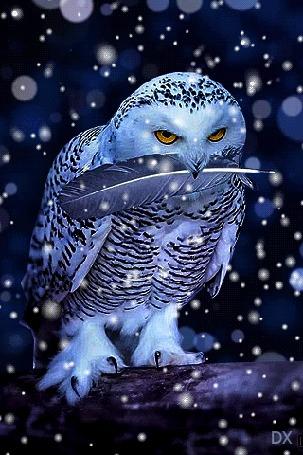 Анимация Сова держит в клюве черное перо, стоя на широкой ветке дерева на фоне сияющих бликов и падающего снега, by DX (© dixinox), добавлено: 19.03.2016 01:38