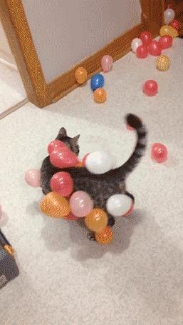 Анимация К наэлектризованному коту прилипают шарики