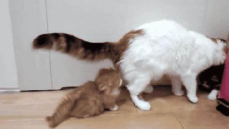 Анимация Кошка умывает котенка, второй котенок пугается и падает на спину