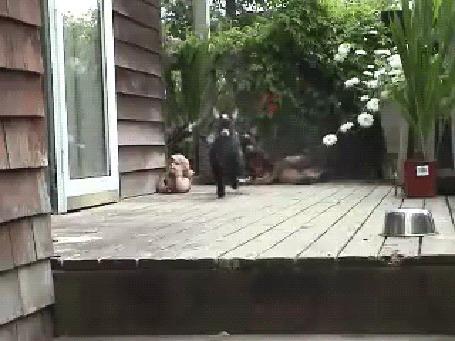 Анимация Черные козлята задорно скачут