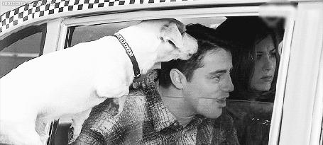 Анимация Джоуи пугается собаки, засунувшей морду в окно, сериал Друзья / Friends, актеры Дженнифер Энистон / Jennifer Aniston и Мэтт ЛеБлан / Matt LeBlanc