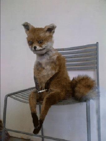 Анимация Чучело лисы сидит на стуле и курит
