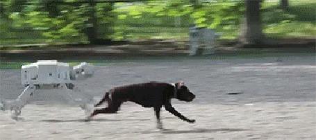 Анимация Собака - робот бежит наперегонки с обычным представителем собачьего рода