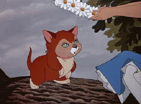 Анимация На котенка по кличке Дина / Dina из диснеевского мультфильма Алиса в стране чудес рука Алисы надевает венок с ромашками