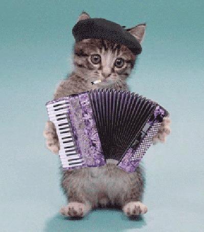 Анимация Играющий на баяне с сигаретой и в кепке кот