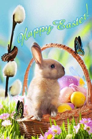 Анимация Пасхальный кролик сидит в корзине с пасхальными яйцами, рядом сидят бабочки (Счастливой пасхи / Happy easter)
