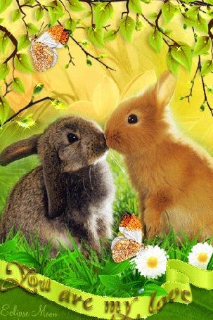 Анимация Кролики сидят в зеленой траве, рядом сидят бабочки (You are my love / Ты моя любовь)