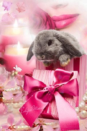 Анимация Кролик сидит в подарочной коробке на фоне женских губ
